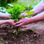 La bolsa kraft y el compost