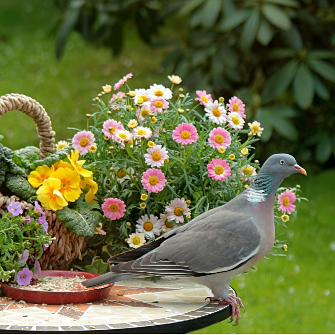 decorar jardin pequeño