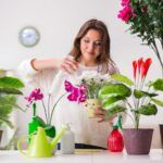 ideas para decorar tu casa con plantas