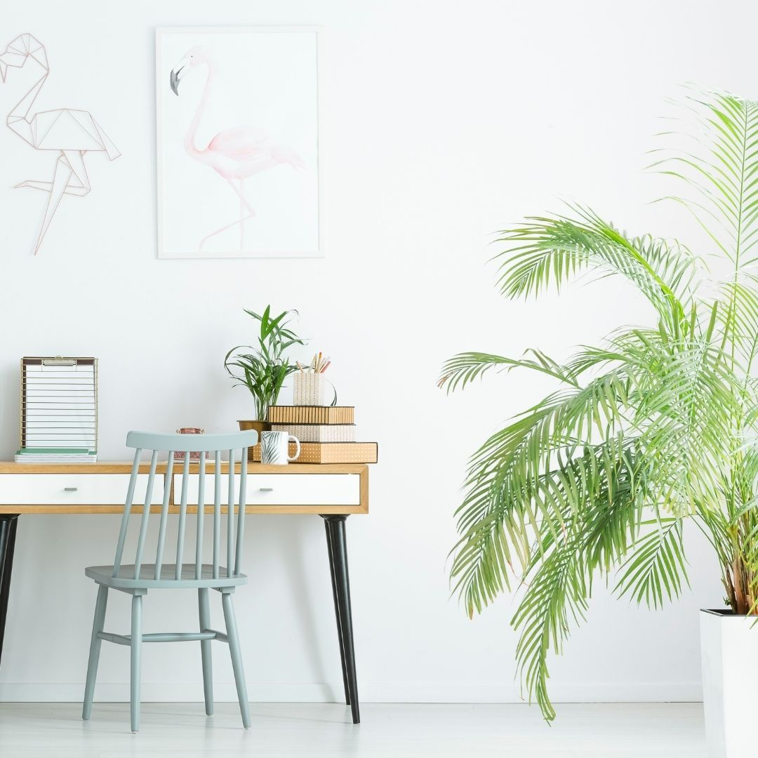 Ideas para decorar con plantas tu casa