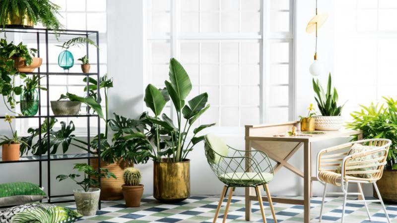 Decorar el salon de tu casa con plantas