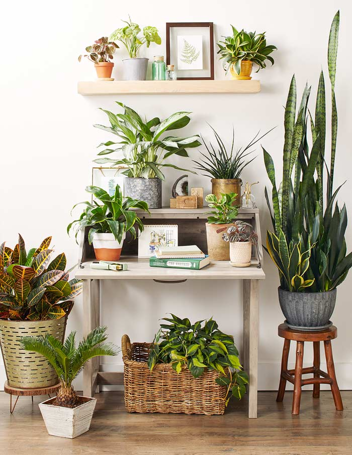 Plantas de interior para decorar tu casa
