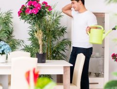 ideas para decorar casa plantas