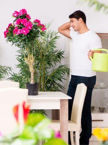 ideas para decorar casa plantas