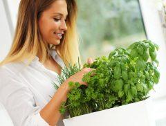 Cómo crear un huerto de aromáticas en tu cocina